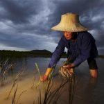 Organic Rice Art Ratchaburi