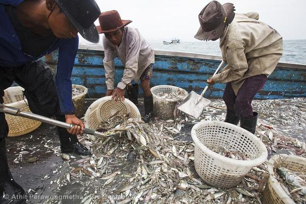 Destructive Fishing Methods in the Gulf of Thailand