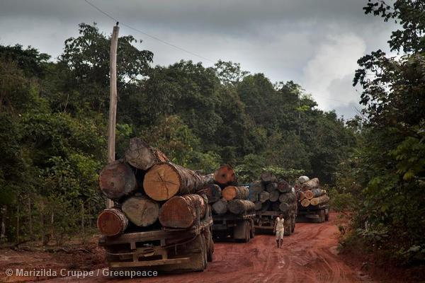 Illegal Timber From The Brazilian Amazon Sold All Over The