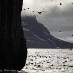 Arctic Sanctuary Protects Wildlife