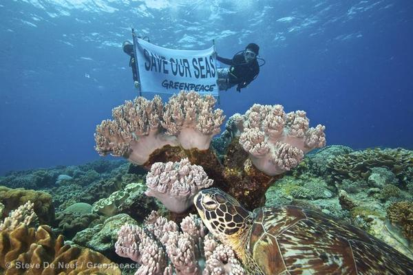 An Urgent Wake Up Call to Protect our Oceans  An Urgent Wake ...
