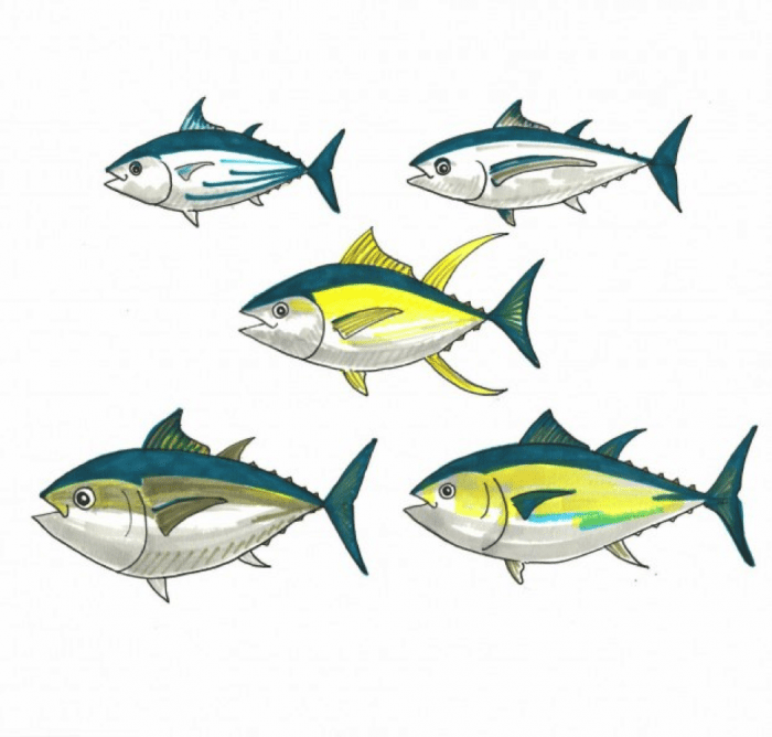 If you eat tuna you should know these five fish for What do tuna fish eat