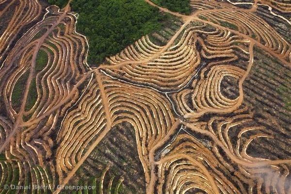 #NutellaGate - Deforestation