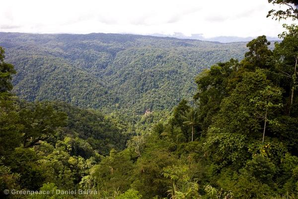 Rainforest near the Kebar mountains.