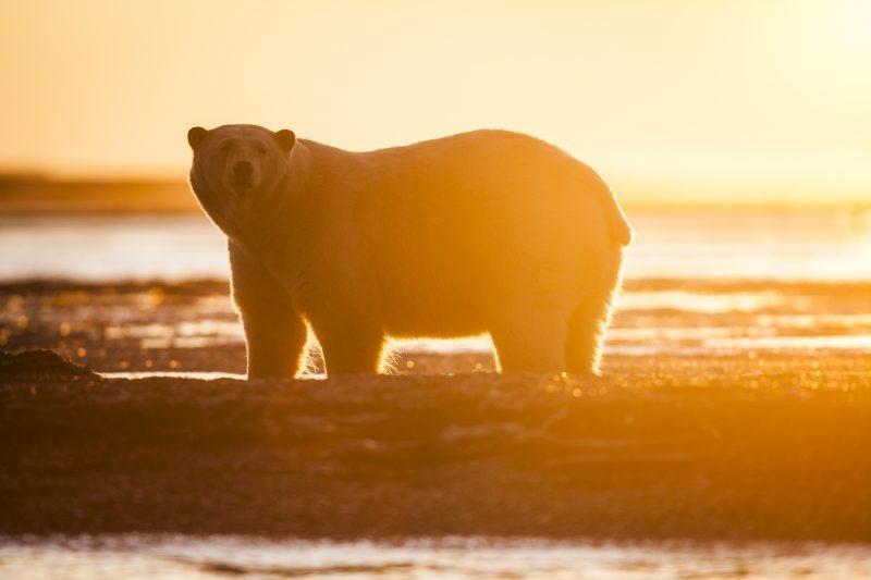 Photo by Rose Sjolander / Greenpeace