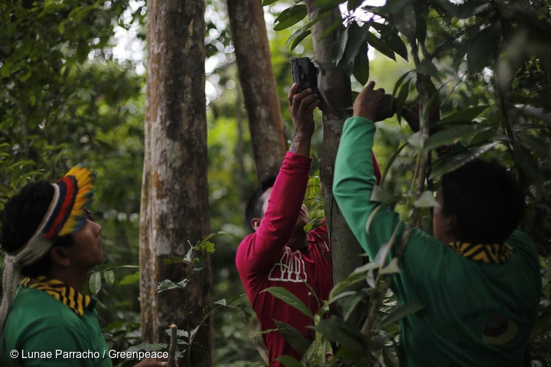 Ka'apor Indigenous Community Fight Amazon Destruction