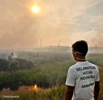 Documenting Forest Fires in Sumatra