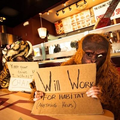 Frontline Orangutans