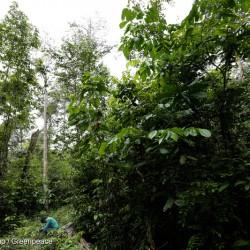 Ka'apor Indigenous Leader in Brazil