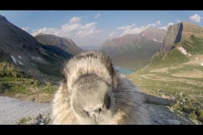 Marmot licks GoPro