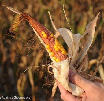 Monsanto and Glyphosate