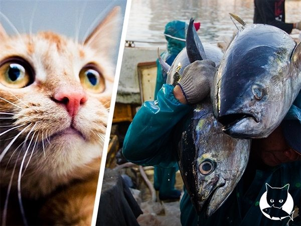 Some of the world's largest pet food brands are using #badtuna. Is yours?