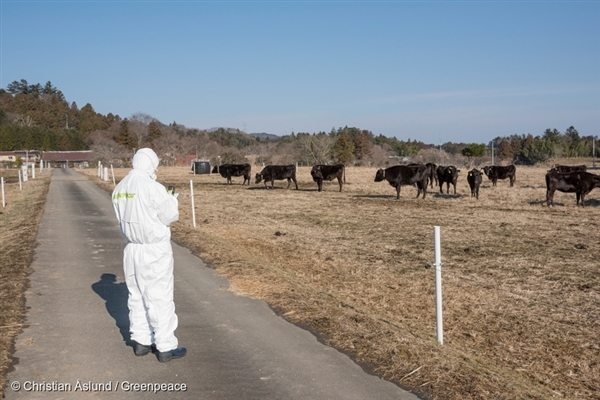 A Greenpeace Japan radiation specialist investigates radioactive contamination at a farm in the district of Namie (Feb 2016)