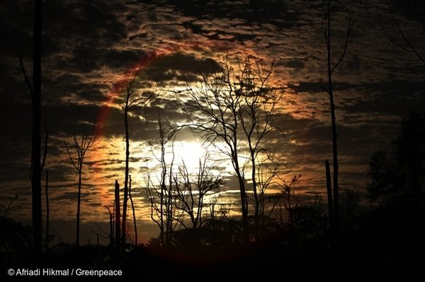 Sunrise above the trees that were burned during forest fires in 2014 at Sungai Tohor village, Riau.