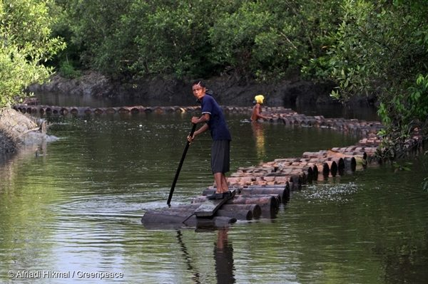 Villagers transport sago logs along a canal to a processing factory in Sungai Tohor, Riau. Sago is a starch extracted from the spongy centre, or pith, of various tropical palm stems. It is an important food and source of income for rural communities.