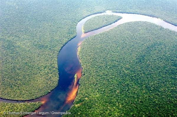 Aerial view of the Congolese rainforest, 11 May, 2008, © Thomas Einberger / argum / Greenpeace