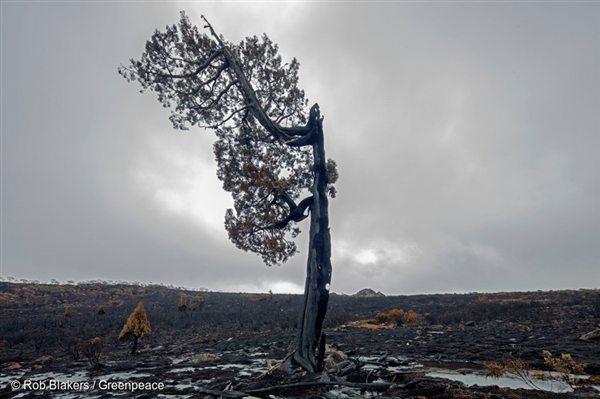Tasmanian Forest Fire Destruction, 9 Feb, 2016, © Rob Blakers / Greenpeace
