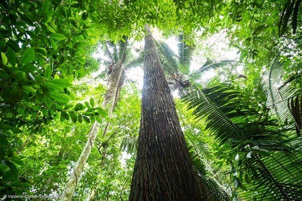 Forest near Tapajós River in the Amazon Rainforest, 28 Feb, 2016, © Valdemir Cunha / Greenpeace