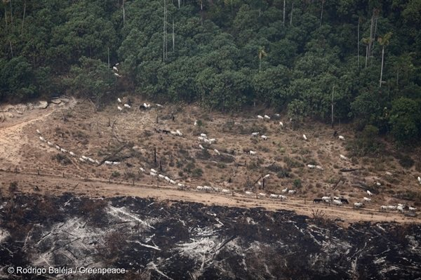 Burning in Amazon for Agriculture, 19 Aug, 2010, © Rodrigo Baléia / Greenpeace