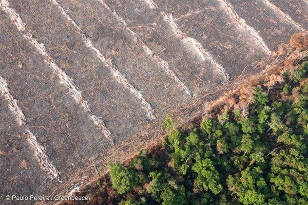 Deforestation in Mato Grosso, Brazil, 17 Oct, 2014, © Paulo Pereira / Greenpeace