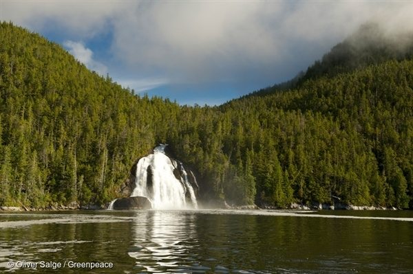 Great Bear Rainforest in Canada. Forest with waterfall. 7 Oct, 2013, © Oliver Salge / Greenpeace