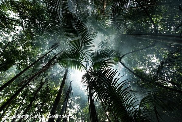 Forest near Tapajós River in the Amazon Rainforest. 28 Feb, 2016. © Valdemir Cunha / Greenpeace