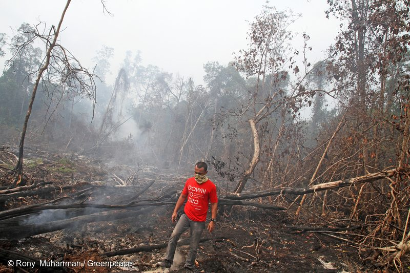 A Greenpeace activist bears witness to continuing fires in peat forests covered by a forest moratorium. Sumber Jaya Village, District Siak Kecil, Bengkalis, Riau Province, Indonesia.