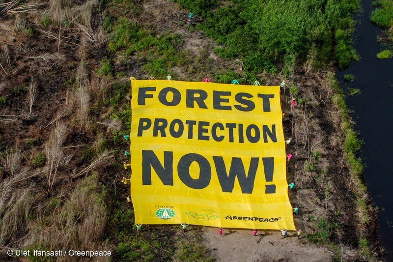 Environmental activists unfurl a banner in an area affected by forest fires in Central Kalimantan.
