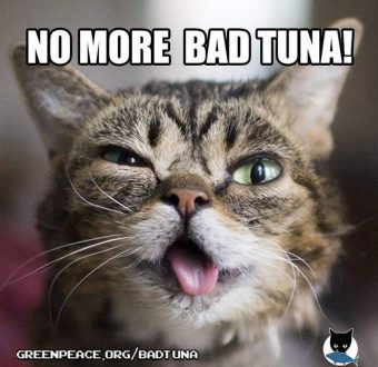 Greenpeace teams up with Lil Bub and other cats of the internet to say no more bad tuna!