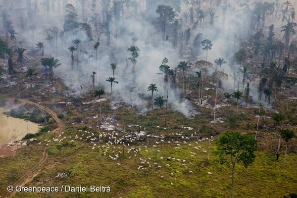 Cattle ranching is a lead cause of deforestation in Brazil.