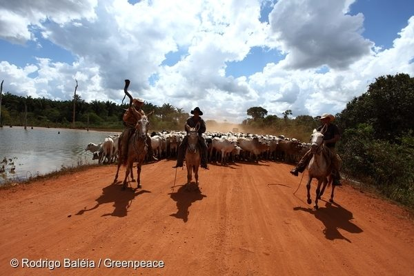 Cattle ranching is a lead cause of deforestation and human rights abuse in Brazil.
