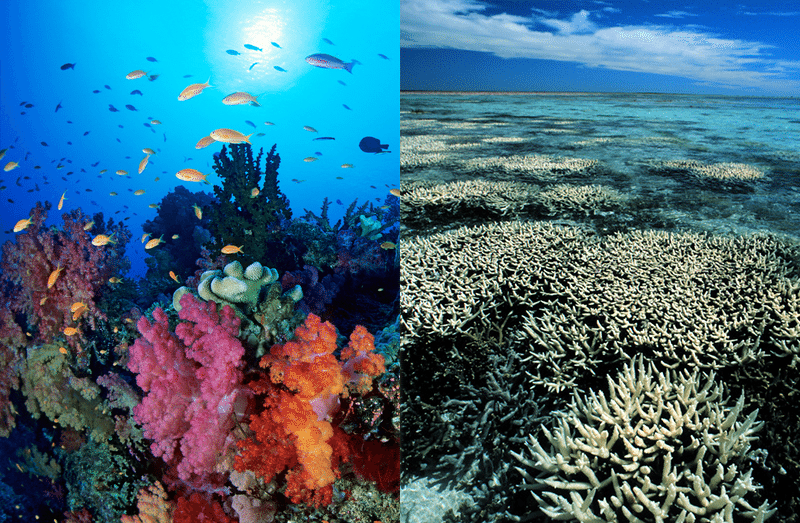 Great Barrier Reef Coral Bleaching
