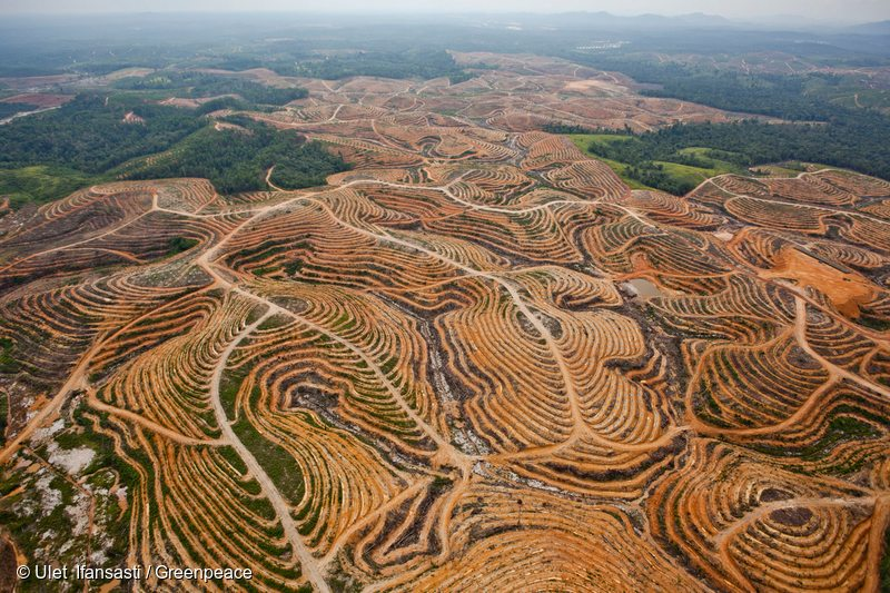 Deforestation in Borneo for palm oil