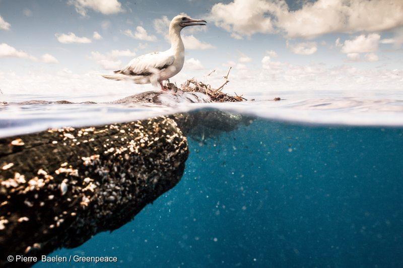 Albatross on a FAD