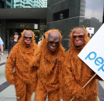Activist orangutans deliver a message to PepsiCo offices in Australia.