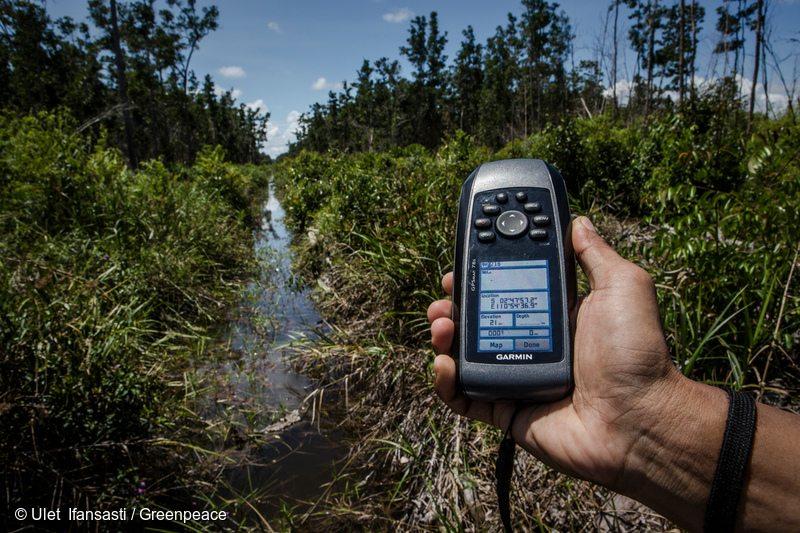 Investigation in IOI Oil Palm Concession