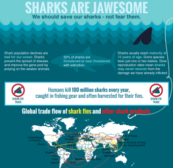 Infographic: Why We Should Save Sharks, Not Fear Them