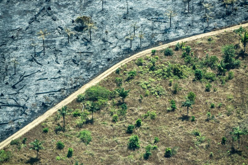 Deforestation in the Amazon Caused by Forest FiresDesmatamento na Amazônia Causado por Queimadas