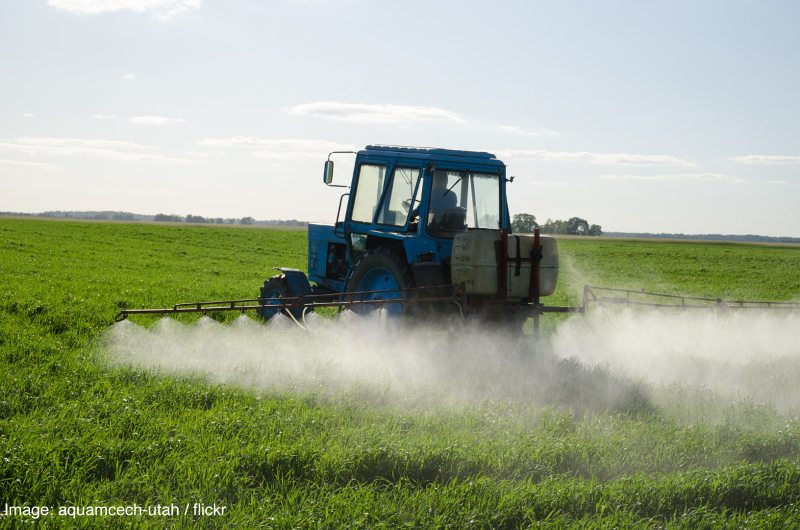 Tractor spray fertilize field with insecticide herbicide chemicals in agriculture field and evening sunlight.