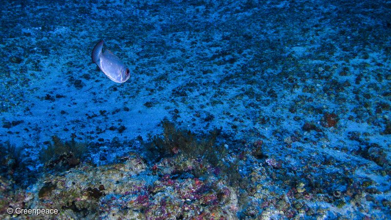 Amazon Reef Corais da Amazônia