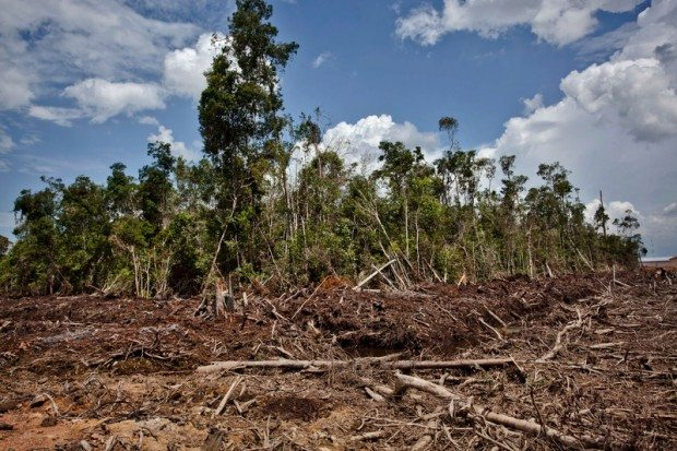 Peatland Destruction in Indonesia