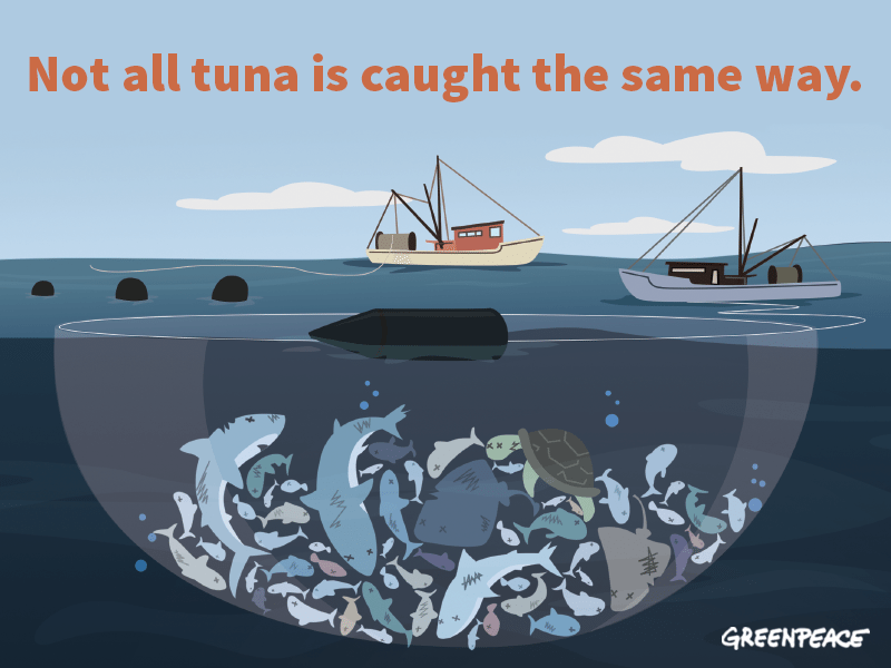 Not all tuna is caught the same way