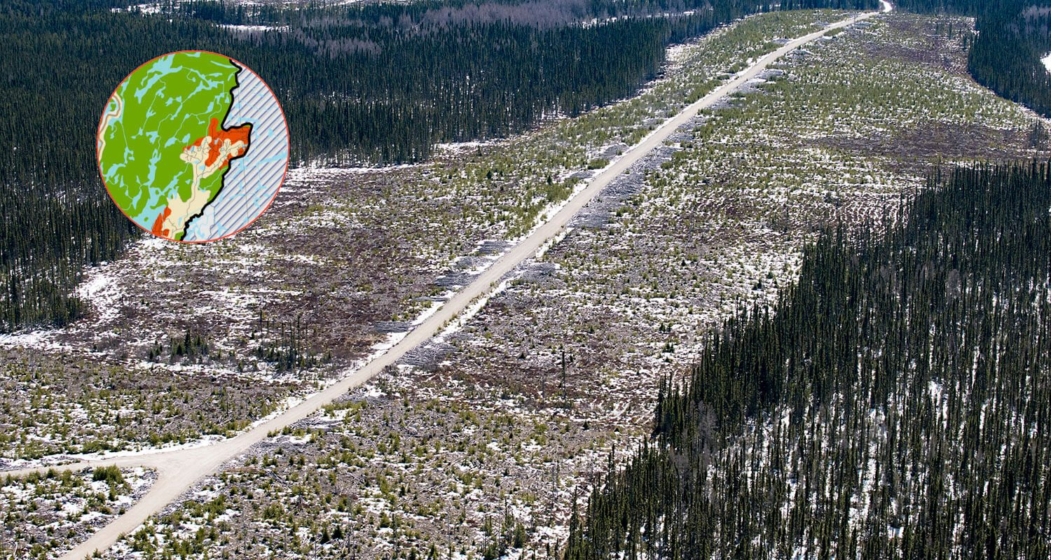 Road connecting to Northeast section of Caribou forest