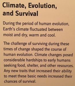 Climate, Evolution, and Suvival