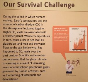 Our Survival Challenge