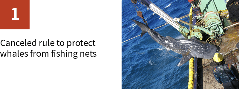 1. Canceled rule to protect whales from fishing nets