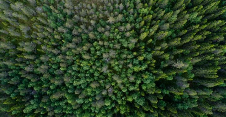 Boreal forest in Sweden.