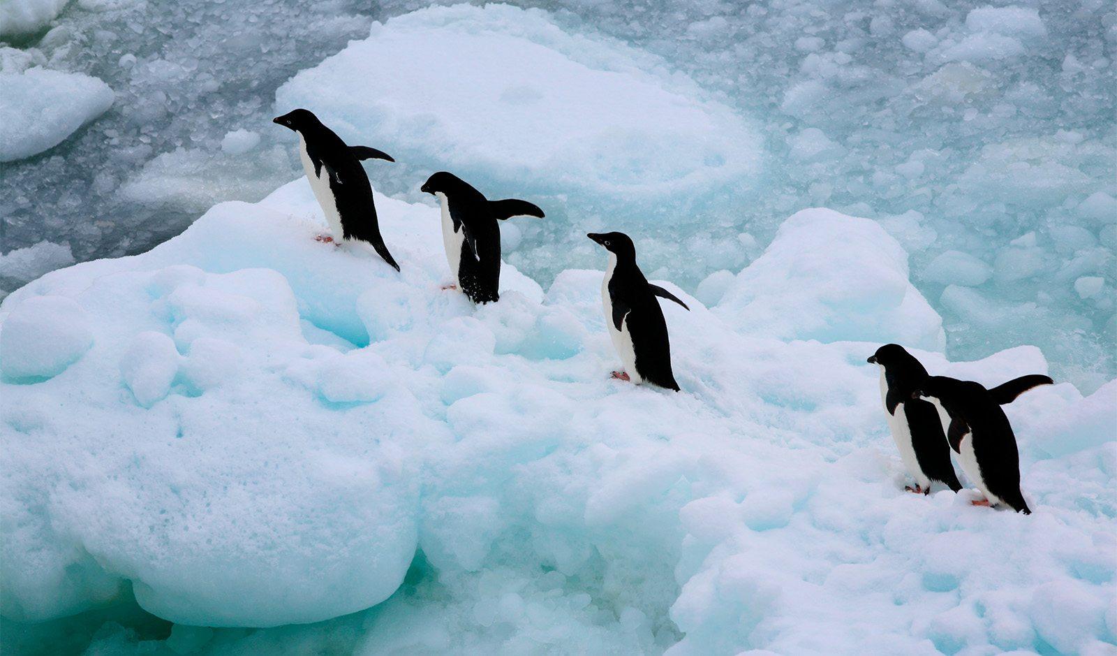 https://www.greenpeace.org/usa/wp-content/uploads/2018/01/penguins-hero-match.jpg