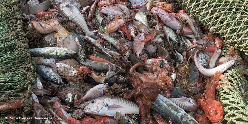 Various ocean wildlife bycatch caught in net