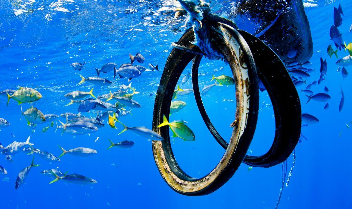 Ensuring Sustainable Seafood - Greenpeace USA